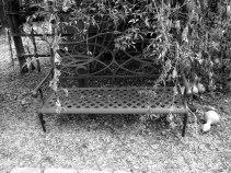 Garden Bench Photography